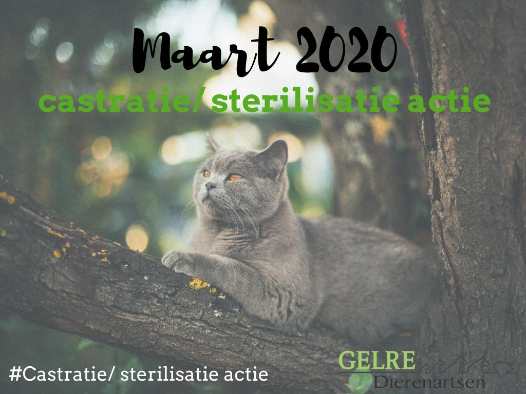 Castratie sterilisatie actie maart 2020