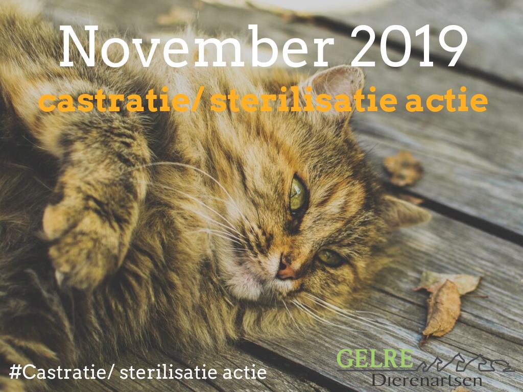 Castratie- en sterilisatie actie nov 2019