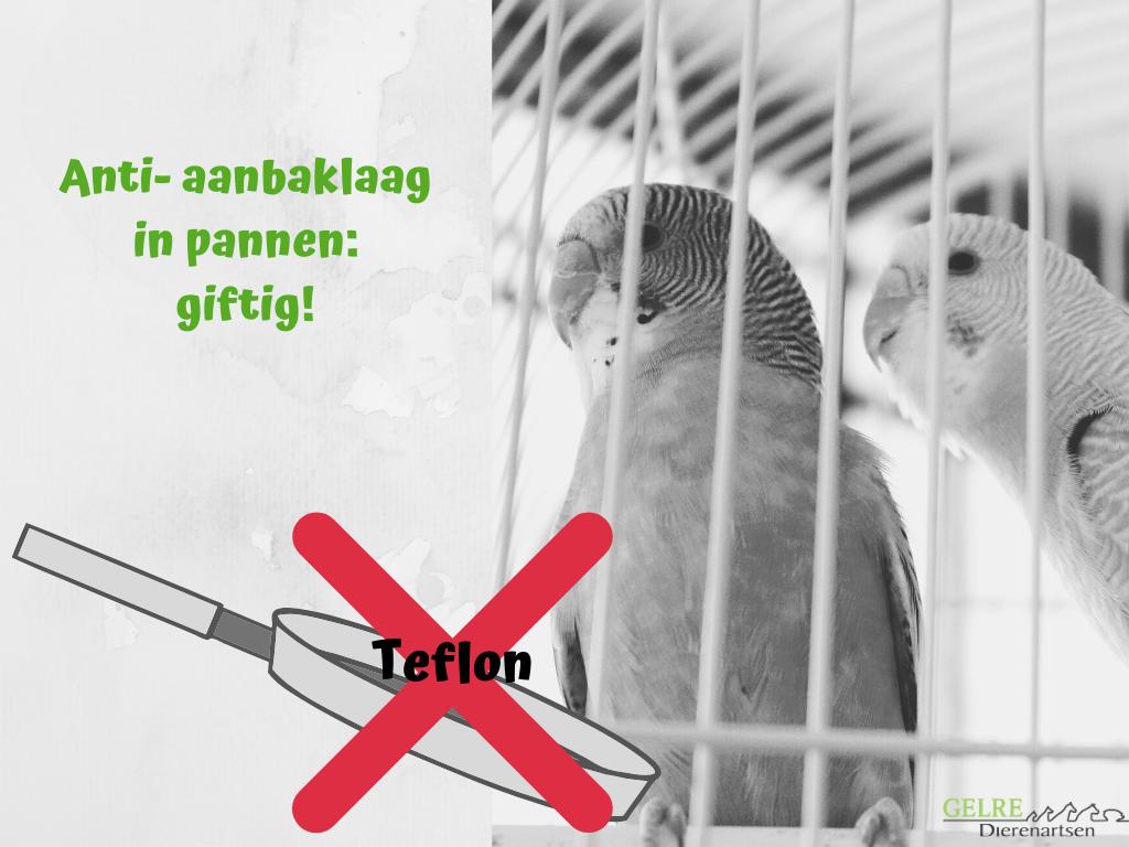 Anti- aanbaklaag schadelijk voor vogel