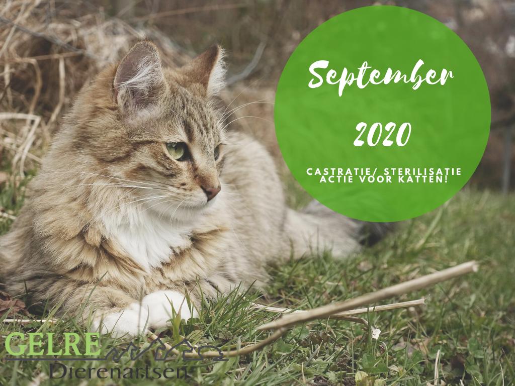 Castr ster actie sept 2020