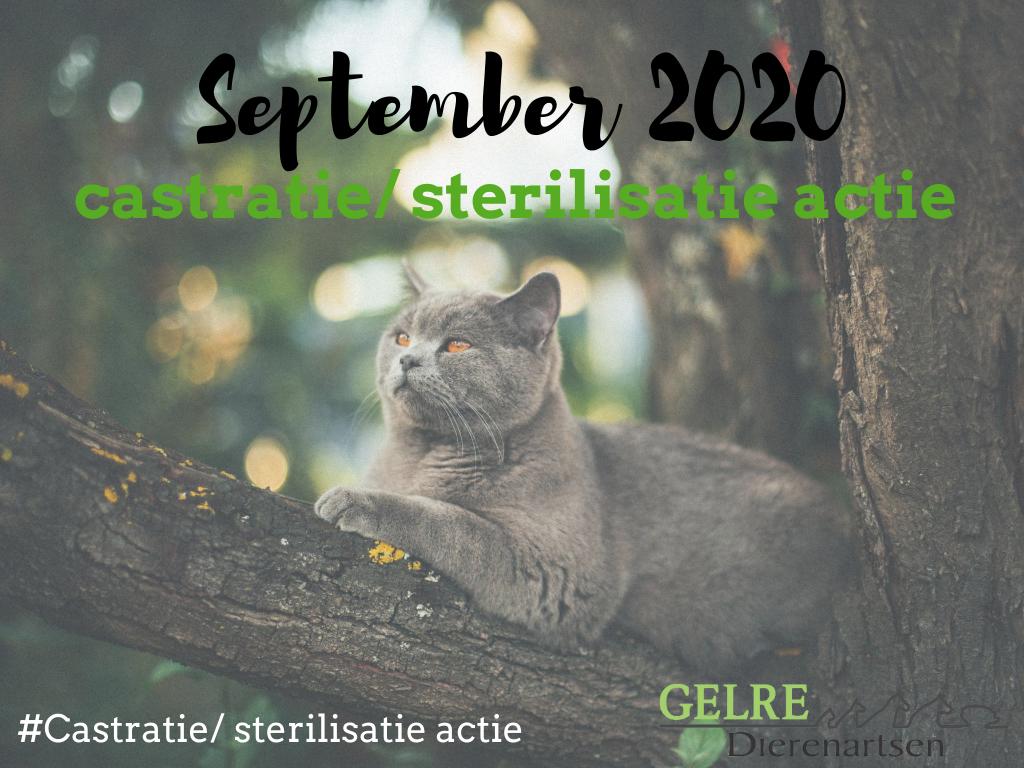 Castr ster actie sept 20201