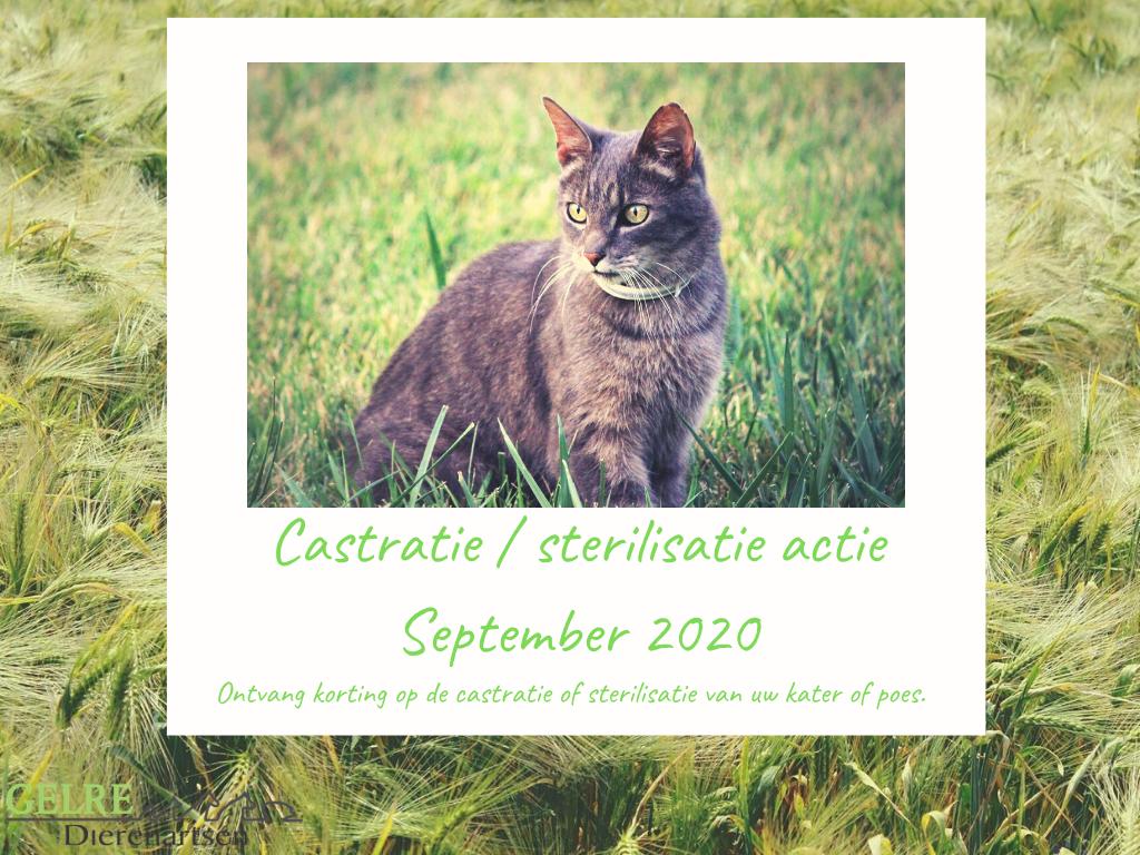 Castr ster actie sept 20202