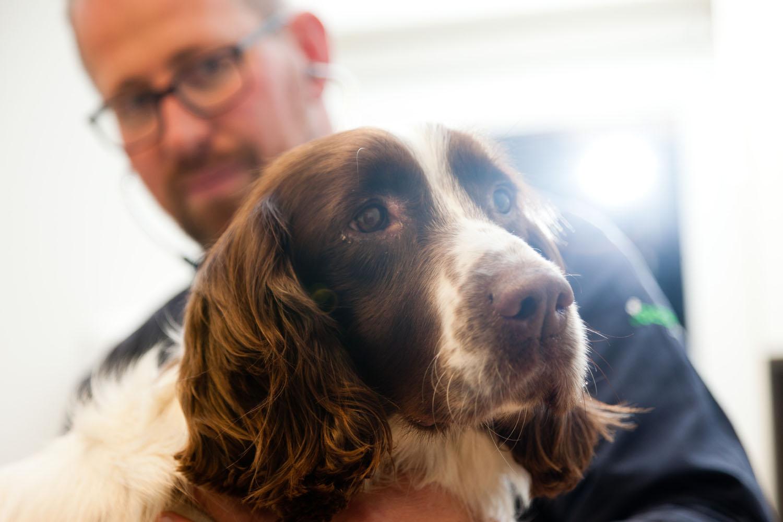Castratie hond dierenarts Dierenkliniek Hellendoorn Nijverdal