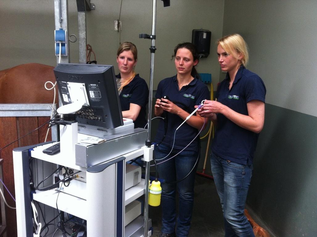 Baarmoedercysten branden bij het paard Dierenkliniek Hellendoorn Nijverdal