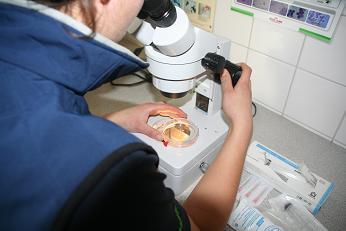 Controleren embryo merrie Dierenkliniek Hellendoorn Nijverdal