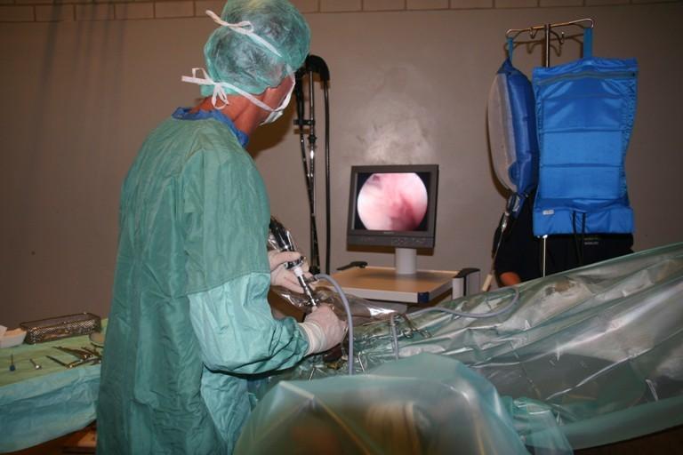 Operaties bij het paard GELRE Dierenartsen