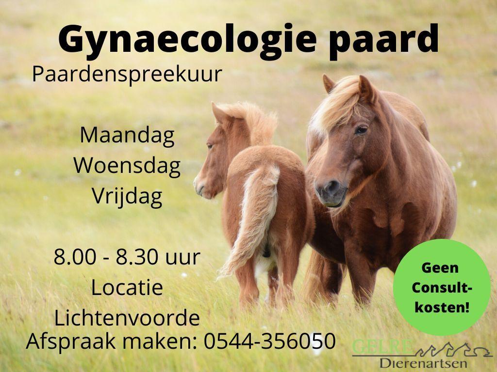 Gynaecologie paard