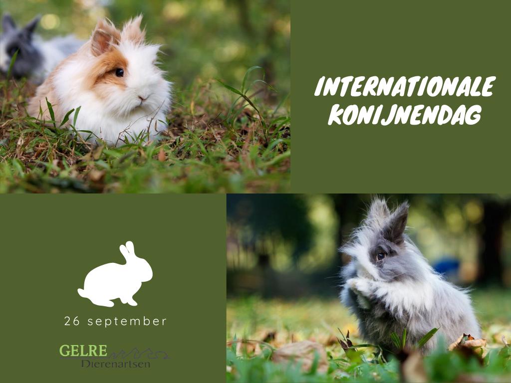 Internationale konijnendag