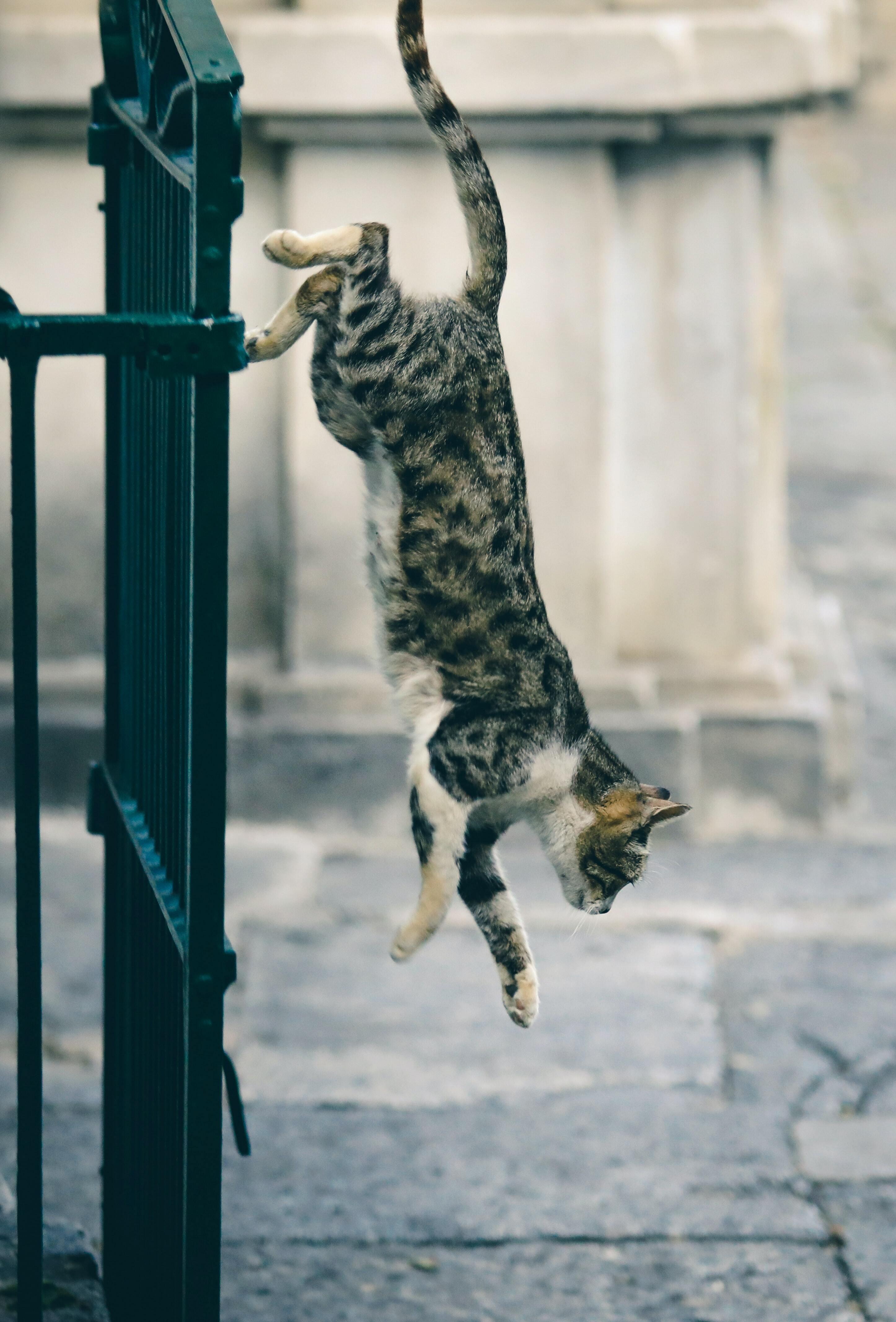 Gewrichtsproblemen bij katten