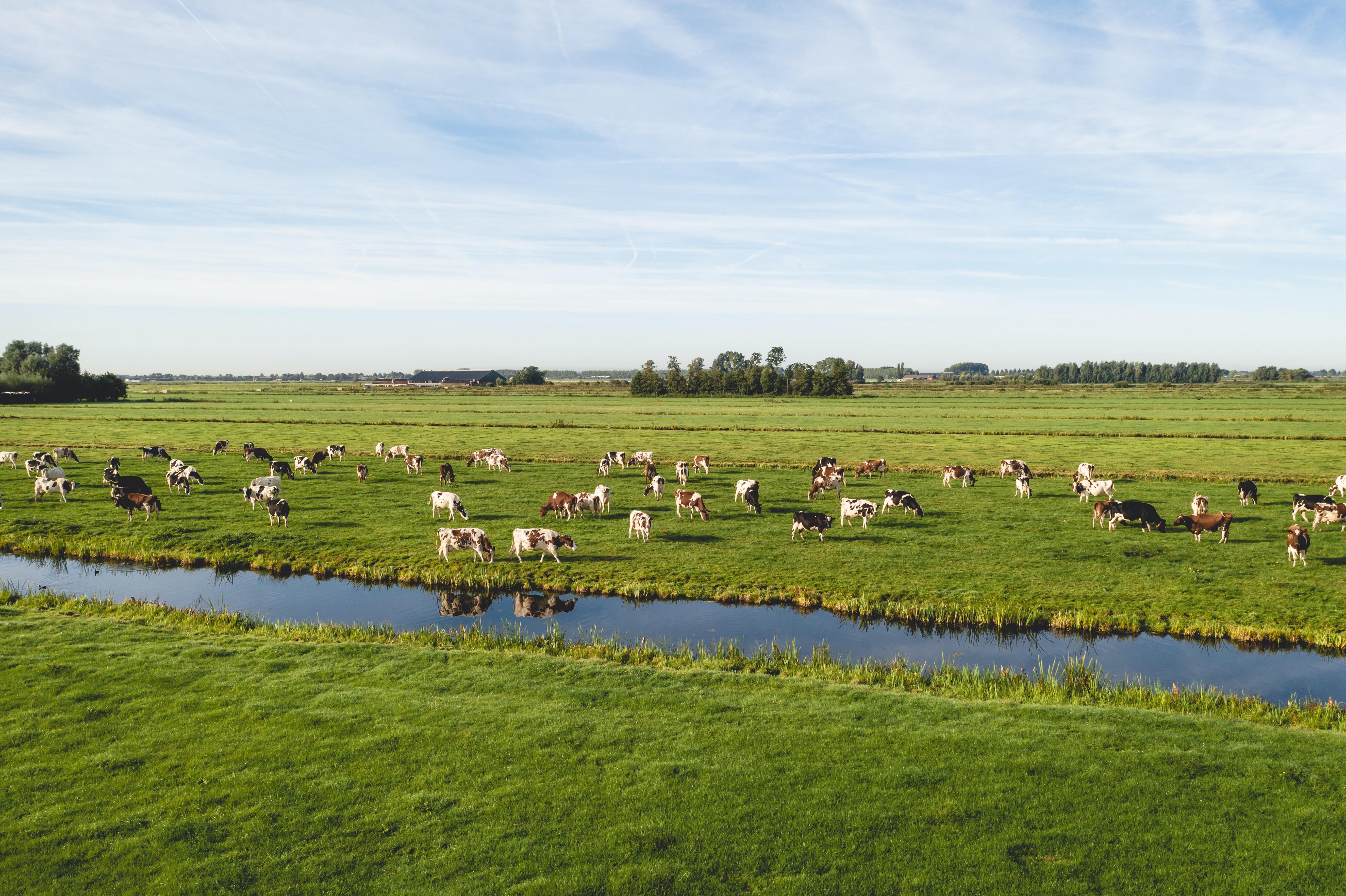 Levensproductie Nederlandse veestapel