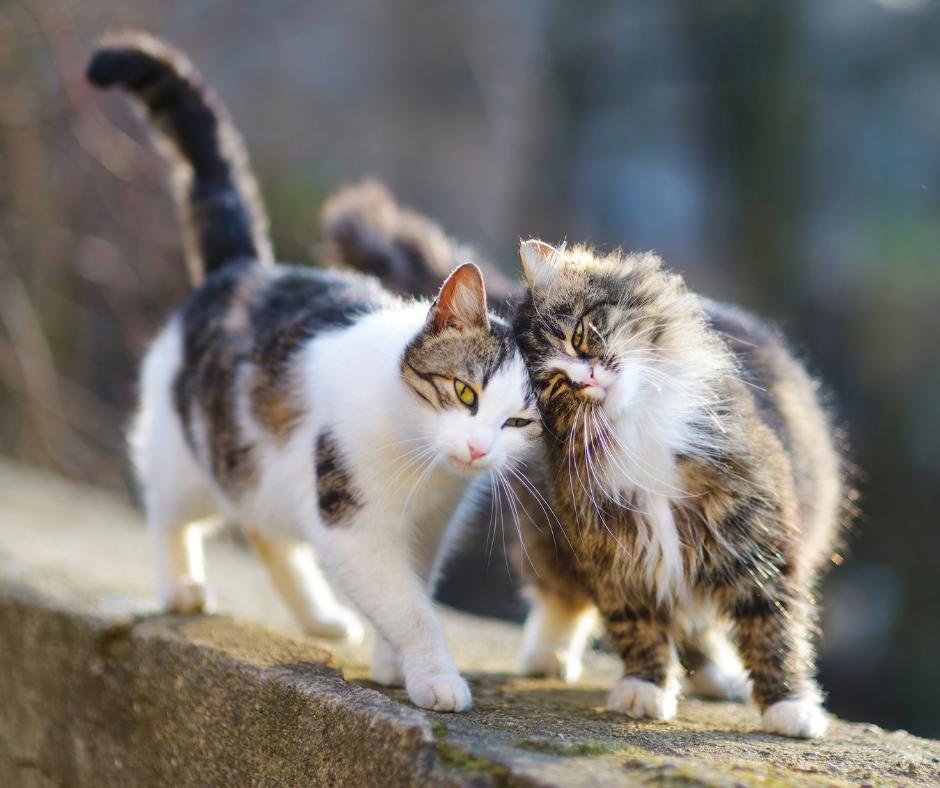 Sterilisatie kat