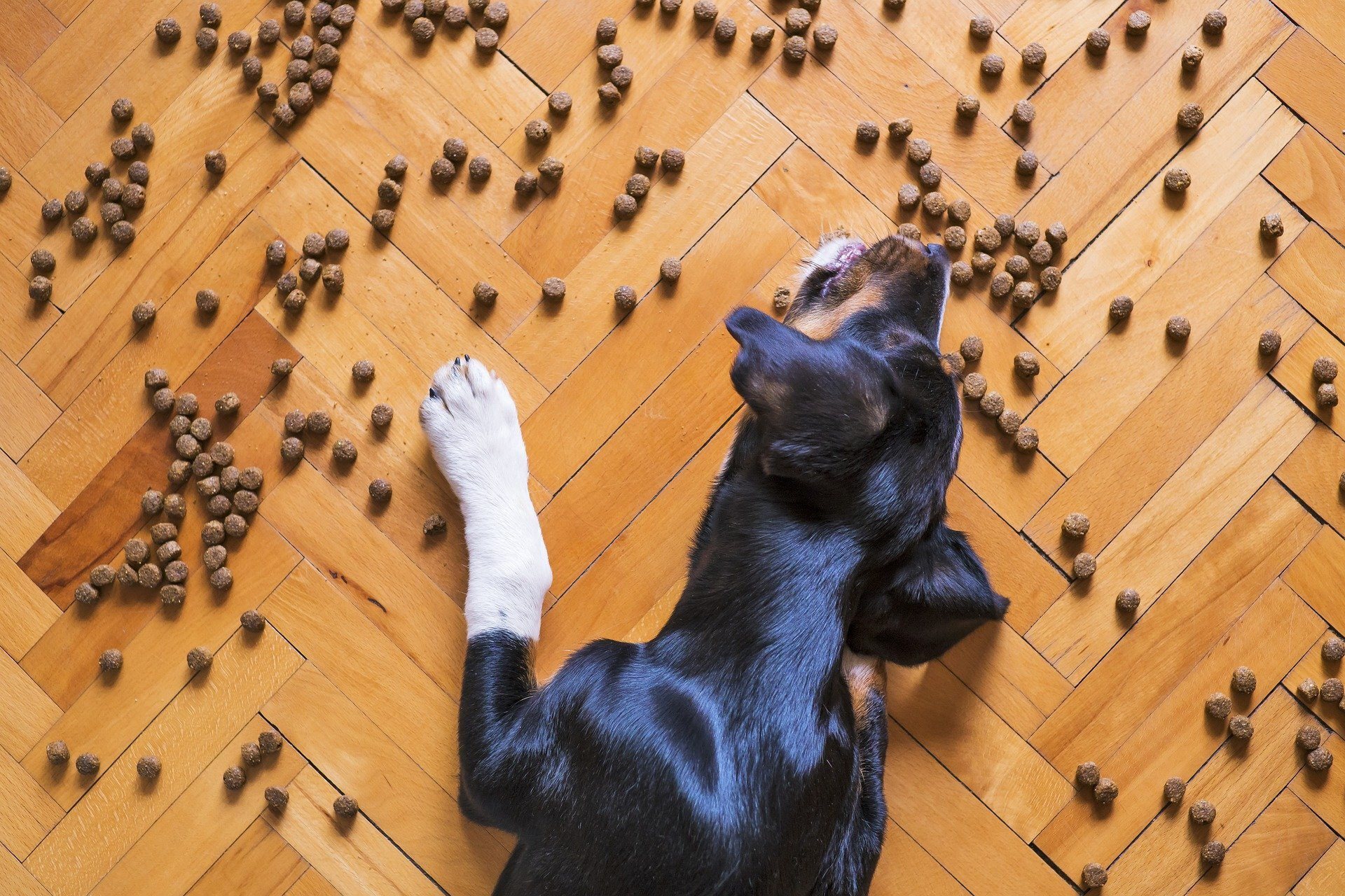 Voedselallergie bij honden