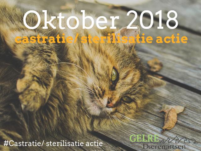 Castratie Sterilisatie Actie Oktober 2018