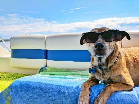 Vakantie Hond