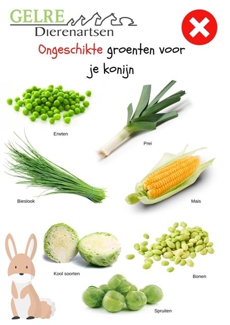 Ongeschikte groenten voor het konijn GELRE