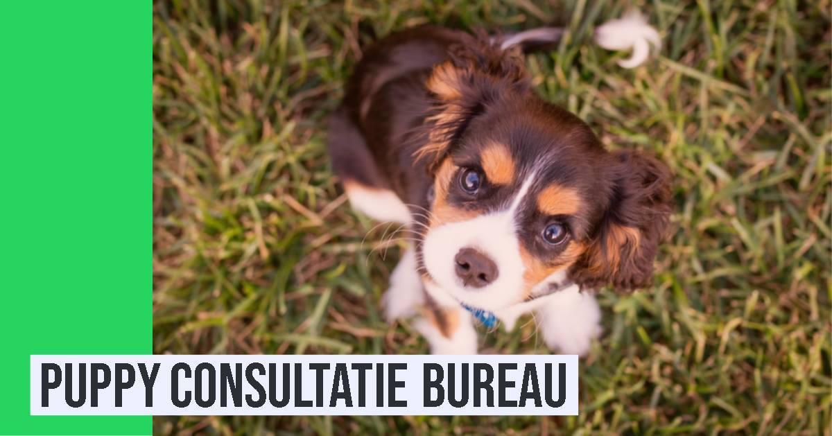 Puppy Consultatie Bureau