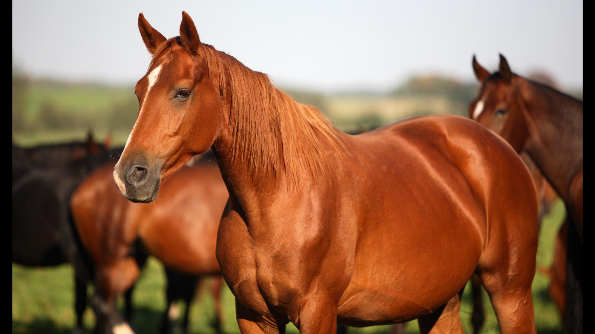 Registratie paard 1