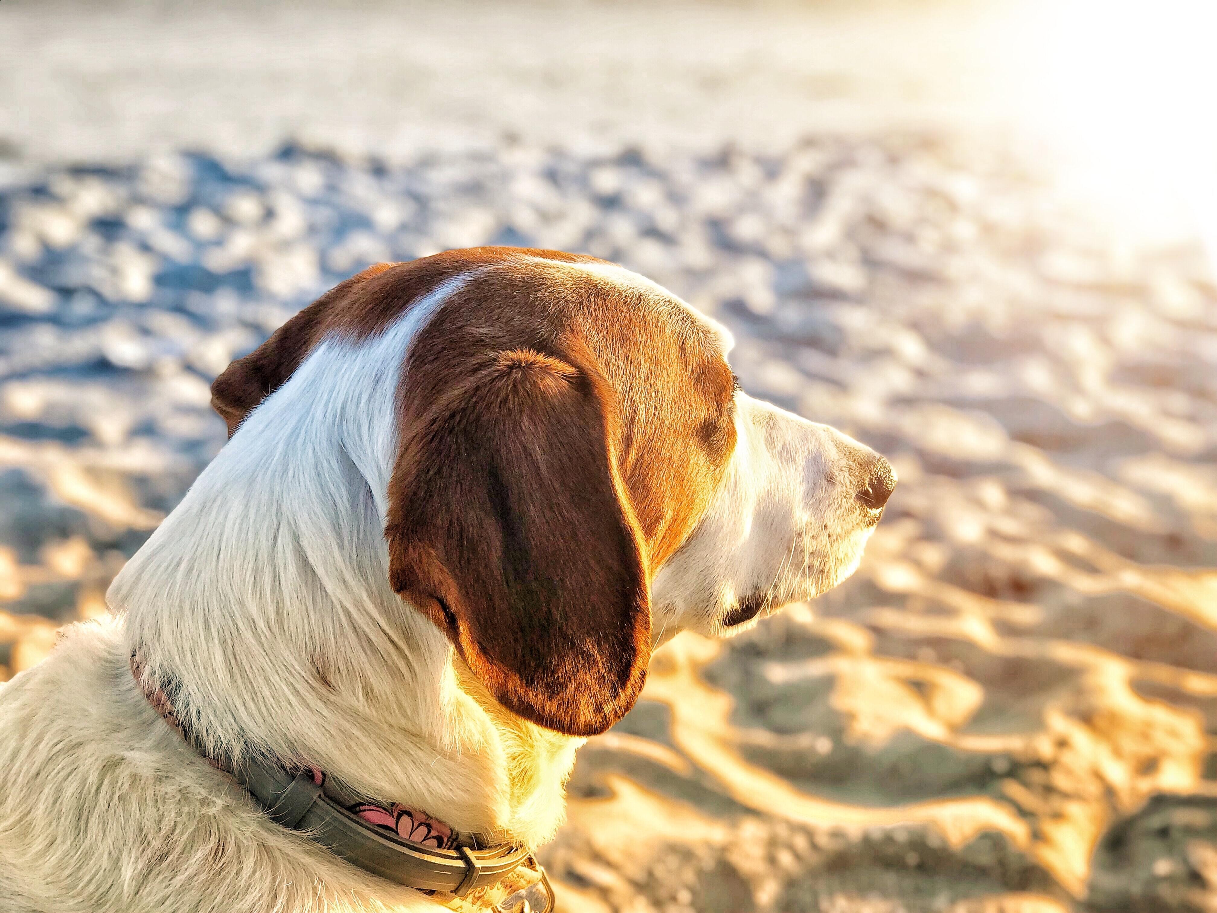 Vakantie met de hond