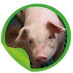 Klanttevredenheidsonderzoek Varkenshouders