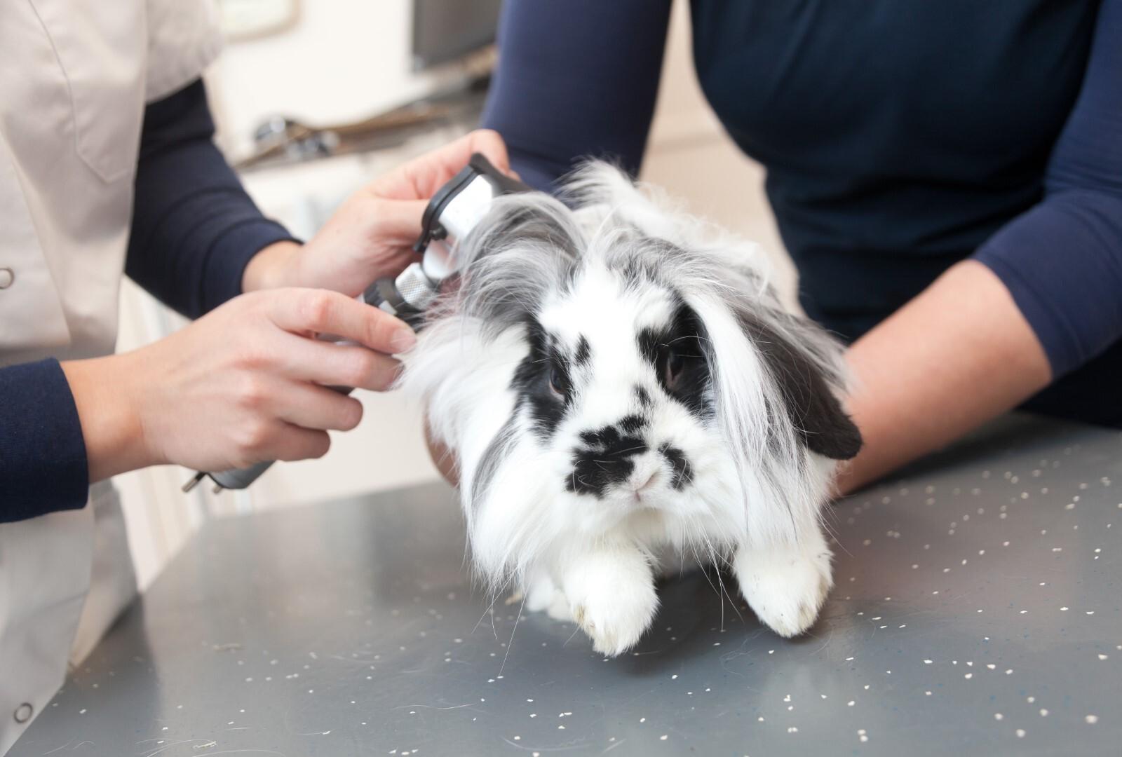 Ziektes en aandoeningen konijn